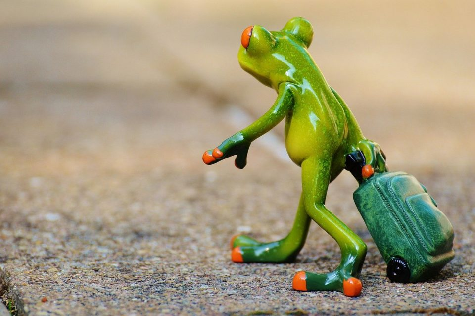 Frog going away with suitcase